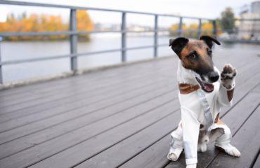 Долой осеннюю хандру: 5 советов от собаки-супергероя