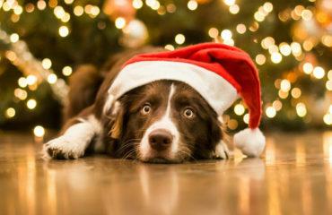 Как встречать год Желтой Земляной Собаки: праздничные советы