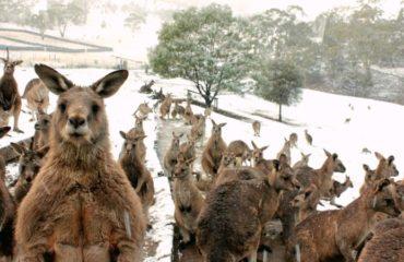 Аномалия в Австралии: на Зеленом континенте выпал снег среди лета