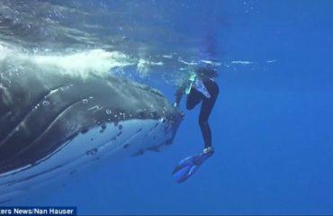 Тихоокеанский кит спас дайвера от акулы
