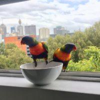 Новый фото-тренд Сети: люди делятся снимками птиц за окном