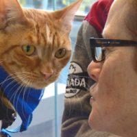 В аэропорту Канады коты помогают справляться со стрессом