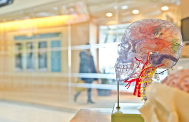 Ученые выяснили, как предотвратить старение мозга