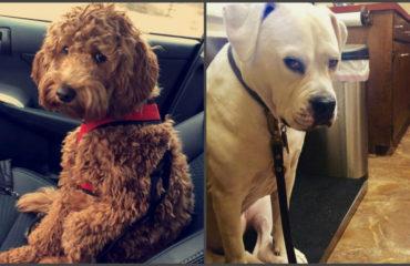 Когда собаки осознали, что едут к ветеринару: забавные фото