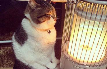 Кот, влюбленный в обогреватель, завоевал интернет