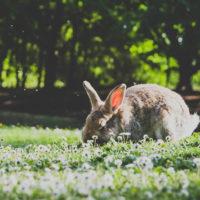 Первый день весны: забавные картинки с радостными животными
