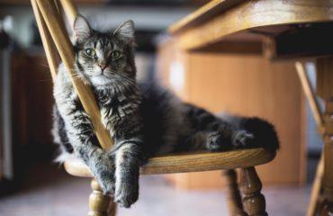Сеть поразила история про кота, тайно жившего на две семьи