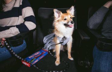 В Сан-Франциско собаки прошлись по красной дорожке на премьере фильма