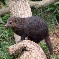 Киевский зоопарк показал своих новых экзотических обитателей