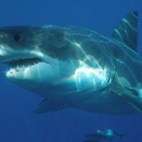 В кратере действующего вулкана обнаружили удивительных акул
