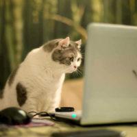 В интернете набирает популярность первая в мире соцсеть для животных