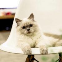 В Ираке открыли забавный отель для кошек