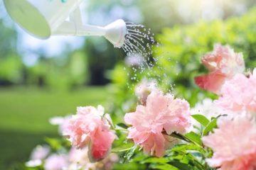 В Сети отпраздновали День обнаженного садоводства традиционным флешмобом