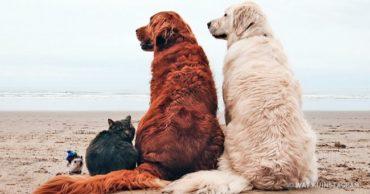 Пятеро в лодке, считая собаку: забавная история девушки, путешествующей с животными