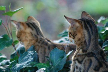 В новозеландской деревне хотят запретить кошек