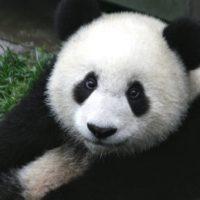 Всемирному фонду дикой природы исполнилось 59 лет