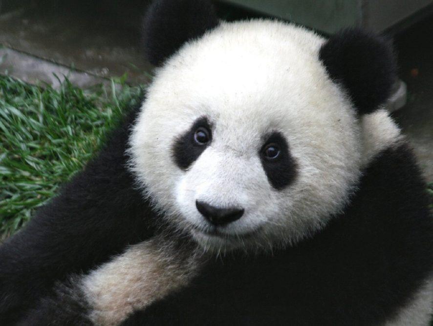 Всемирному фонду дикой природы исполнилось 57 лет