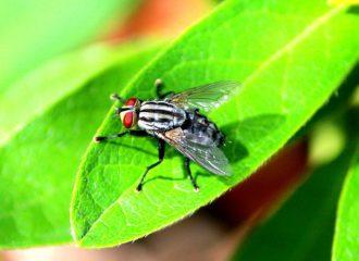Ульяна Супрун не рекомендует есть еду, на которой сидела муха