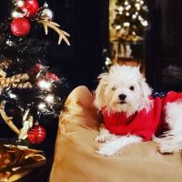 """""""Новый зеленый"""": в США становятся трендом черные рождественские елки"""