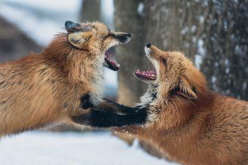Зимний позитив: как животные радуются снегу