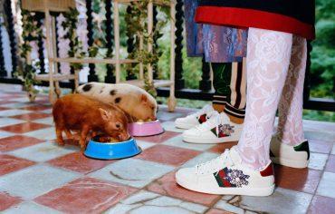 Gucci выпустили капсульную коллекцию в честь года Свиньи