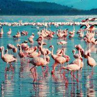 Идея для отпуска: Кения