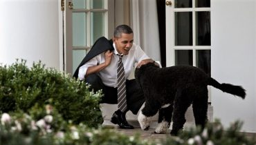Фала, Мисс Бизли и Бо: чем прославились собаки Белого дома