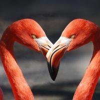 Google выпустил романтичный дудл, посвященный Дню Святого Валентина