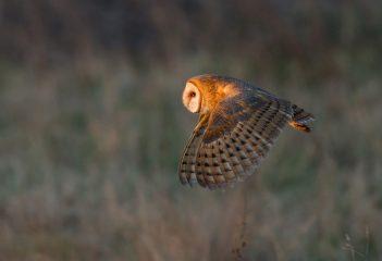 Международный день птиц: самые забавные фото пернатых