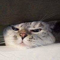Кошка, секс и голодный джентльмен: топ-5 необычных Instagram-аккаунтов ко Дню блогера