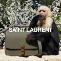 Обезьянка Алли стала звездой рекламной кампании Saint Laurent