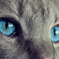 Всемирный день кошек: забавные фото пушистых любимцев