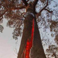 Николь Кидман, Pink, Селена Гомес: звезды собирают средства на борьбу с пожарами в Австралии