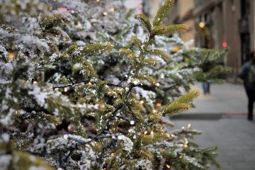Новогодняя елка в Киеве вошла в топ-5 лучших в Европе