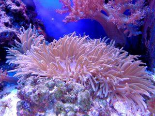 """Из-за угрозы кораллам: в Палау запретили """"токсичные"""" солнцезащитные кремы"""
