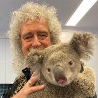 Гитарист Queen устроил сольный концерт для коалы, которую спасли от пожаров