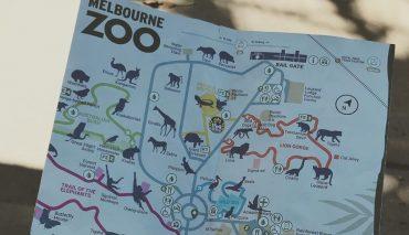 Танцующий смотритель Мельбурнского зоопарка стал звездой Сети