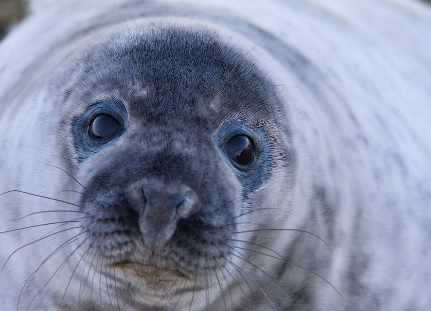 Развлекал, как мог: тюлень пытался поднять настроение кошке