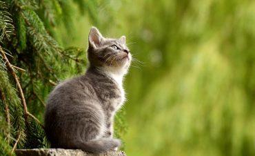 """""""Своих не бросаем"""": на Reddit появилось забавное видео о кошачьей солидарности"""