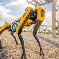 Робота от Boston Dynamics учат пасти овец