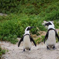 Пингвинам устроили персональную экскурсию по музею