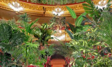 Только для растений: испанский оперный театр даст первый концерт