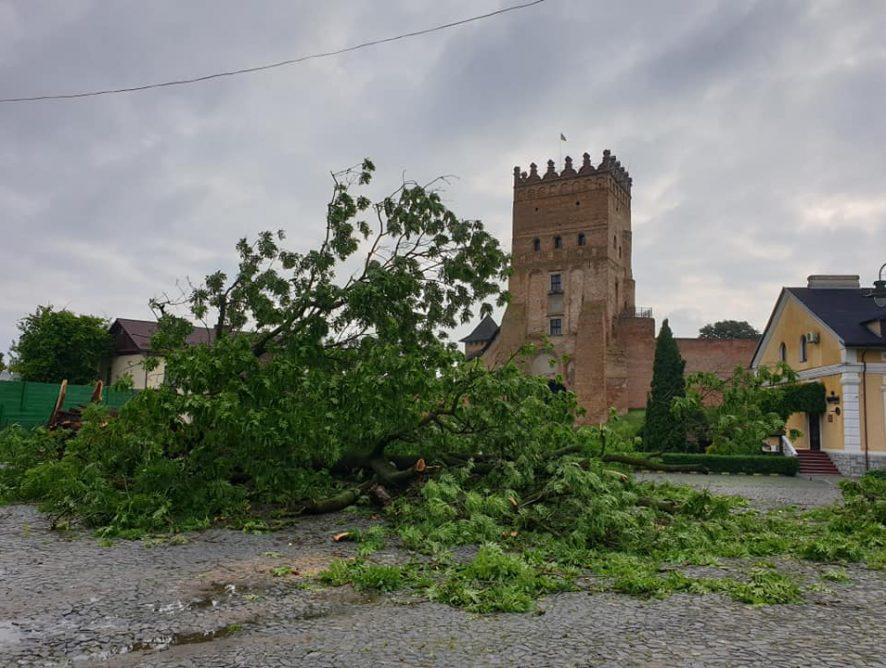 В Луцке упал знаменитый 200-летний Лесин ясень