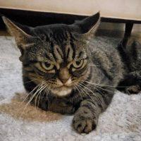 В Сети появилась конкурентка знаменитого Grumpy Cat