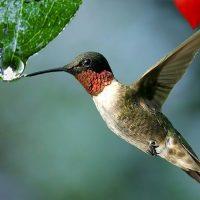 Маленькие глазастики: колибри видит цвета, недоступные человеку