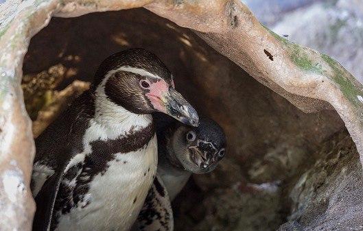 Пингвинов из британского зоопарка развлекают мыльными пузырями