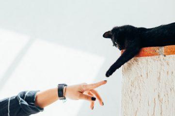 В США появился необычный сервис знакомств для любителей кошек