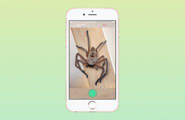 В Австралии изобрели Shazam для пауков