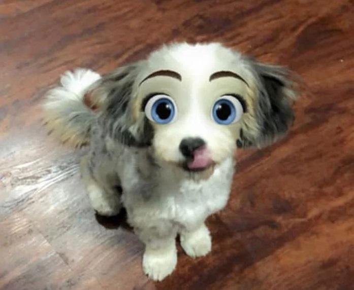 В Snapchat появился фильтр, превращающий собак в диснеевских персонажей