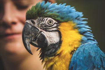 Британский парк изолировал попугаев, которые грязно ругались на посетителей